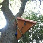 sensor hanging in a tall oak tree in Rufford Park, Sherwood Forest