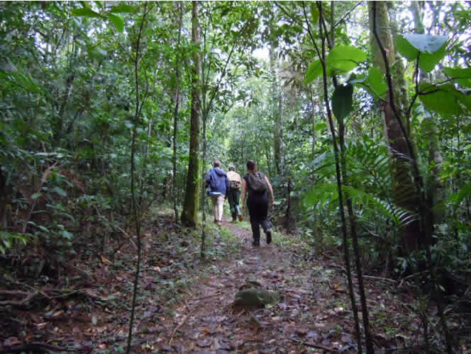 walking in the Serro Do Mar mountains in the Mata Atlantica, Brazil